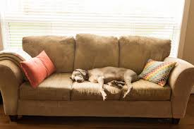 upholstery cleaning orange county upholstery cleaning laguna niguel ca beacon carpet cleaning inc