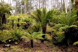 Mt Lofty Botanic Gardens Lakeside Trail Mount Lofty Botanic Gardens Trails Sa
