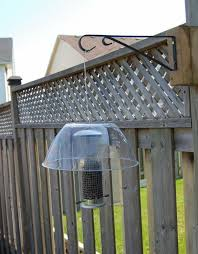 Backyard Bird Store Best 25 Squirrel Proof Bird Feeders Ideas On Pinterest Bird