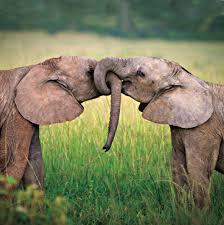 heartwarming tales of animal friendship