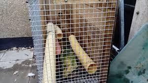 Ferret Hutches And Runs Ferret Hutch An Run In Ballymena County Antrim Gumtree
