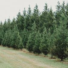 country pines christmas tree farm home facebook