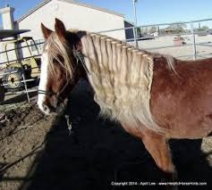 hairstyles for horses december 2014 helpful horse hints