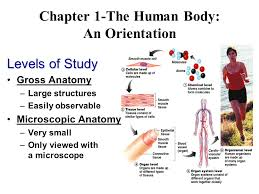 Anatomy And Physiology Pick Up Lines Welcome To Anatomy Physiology Ppt Video Online Download