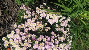 blog the addicted gardener part 2