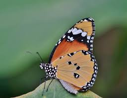 weekly guidance from kaypacha like a butterfly emerging from it s