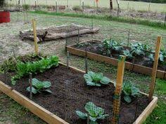 Fall Garden Plants Texas - herban bliss fall gardening in south texas garden ish