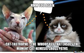 Ugly Cat Meme - catastrophe sphynx versus grumpy cat by wumc meme center