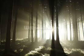 light and dark forest wallpaper wall mural wallsauce usa light and dark forest wall mural photo wallpaper