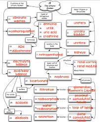 endocrine system concept map chapter 15 concept map truaxbiology com r truax