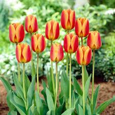 purple flower bulbs garden plants u0026 flowers the home depot
