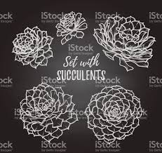 hand drawn vector illustrations set with succulents sketch stock
