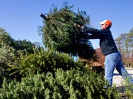 christmas tree recycling locations in lake county lake forest