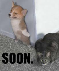 Cat Soon Meme - funny animals 3 meme humor and animal