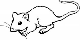 coloring page of a rat rat coloring page rat terrier coloring page mouse rat coloring
