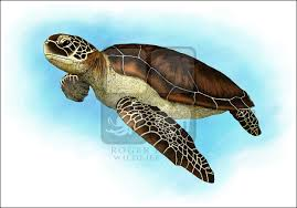 line art and full color illustrations of sea turtles