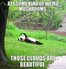 Funny Panda Memes - funny panda bear dump a day