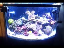 led aquarium lights for reef tanks cheap led lighting for a reef tank that works youtube