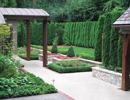 Create Privacy In Backyard by Best 25 Arborvitae Landscaping Ideas Only On Pinterest Backyard