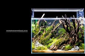 Small Tank Aquascaping Favourites Nano Tank By Aqua Color The Amount Of Details That He