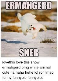 Ermahgerd Animal Memes - ermahgerd sner lovethis love this snow ermahgerd omg white animal