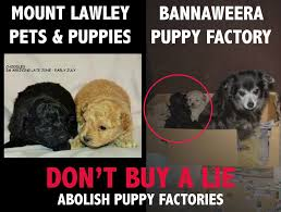 Law Dog Meme - oscar s law mt lawley pets puppies proudly state on facebook