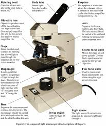 compound light microscope uses parts of a microscope and their functions mr klein s classes