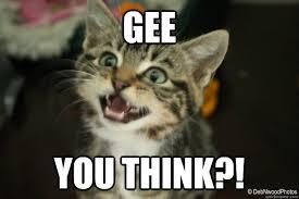 You Think Meme - gee you think sarcastic cat quickmeme