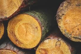 wood free stock photo
