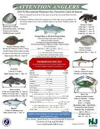 description walleye fishes underwater photo stizostedion vitreum