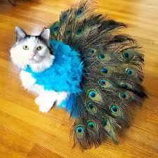 Cat Halloween Costumes Cats Favorite Pet Halloween Costumes 2015