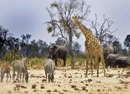 african safari animals animals seen on an african safari holiday true page turner