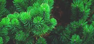 christmas tree netting manufacturer swm