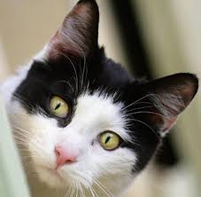 Katze Schlafzimmer Ja Bett Nein Psychologie Wenn Haustiere Aus Eifersucht Hassobjekt Werden Welt