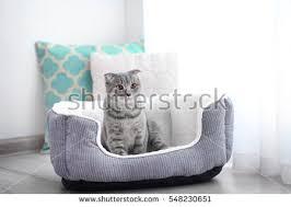 Kitten Bed Kitten Bed Stock Images Royalty Free Images U0026 Vectors Shutterstock