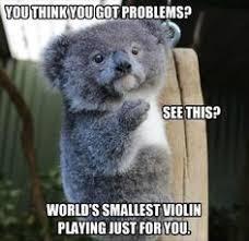 Angry Koala Meme - evil koala meme google search funny stuff pinterest meme
