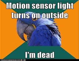 Paranoid Parrot Memes - animal memes paranoid parrot mission failed i can has