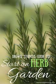 start an herb garden beginners guide to start an herb garden