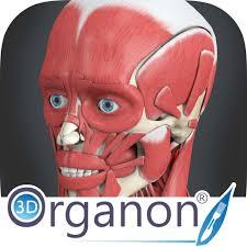 3d Head Anatomy 3d Organon Anatomy