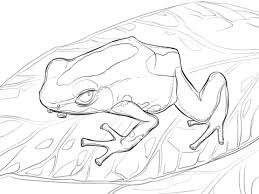 dyeing dart frog coloring free printable coloring pages