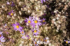 November Flowers Agua Caliente Canyon Trail Hike Lemmon