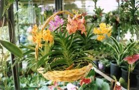 orchids for sale asian orchids belt thailand market