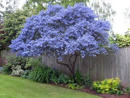 ornamental trees for small gardens evergreen landscape