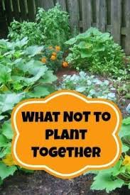 container vegetable gardening beginners easiest and pot friendly