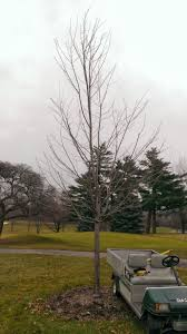 meadowbrook country club golf course maintenance december 2013