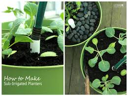 container gardening with sip u0027s