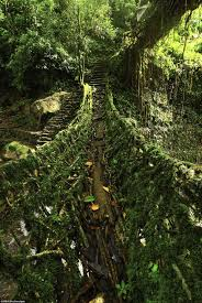 What Is Root Bridge How Tribes In India Use Tree Roots To Make U0027living Bridges
