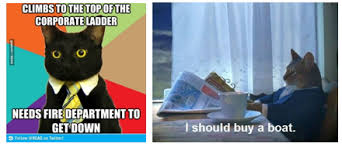 Newspaper Cat Meme - i should buy a boat cat meme imgflip 100 images boat cat meme