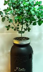 macro garden diy mason jar non circulating hydroponics aka the