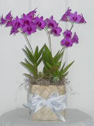 Orchid Decorations For Weddings Potted Orchid Centerpieces U2014 Need Help Weddingbee